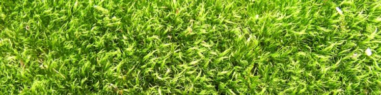 cropped-herbe-photo.jpg